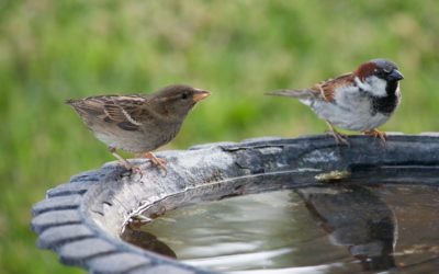 Water voor vogels