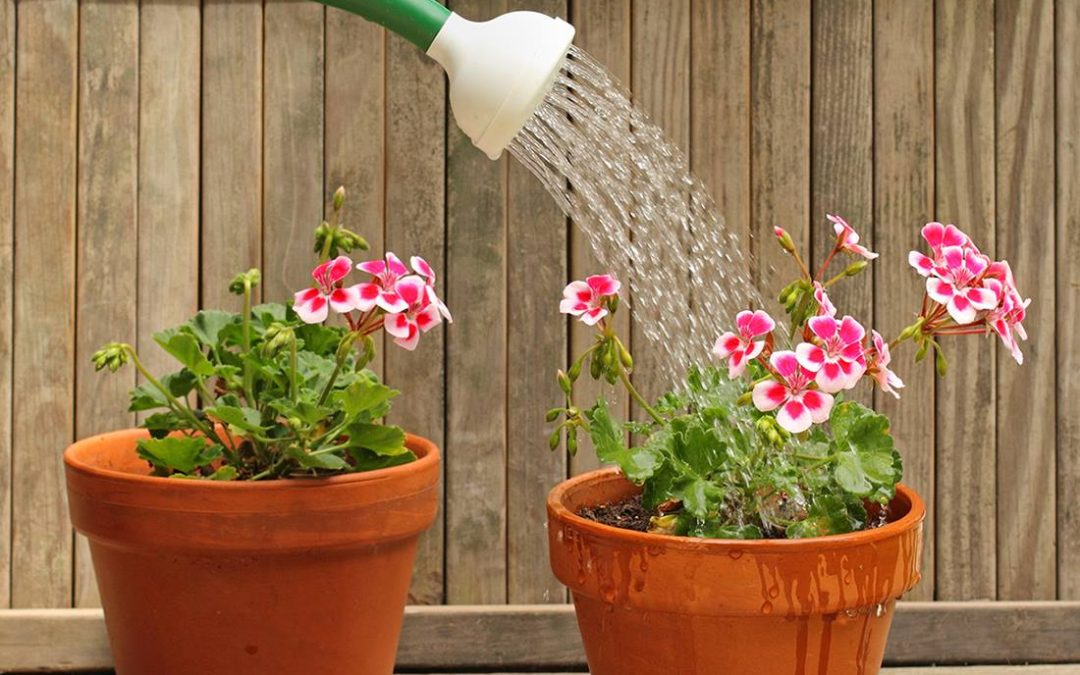 Water voor planten in potten